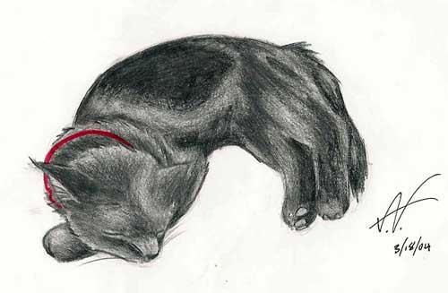 Kiwi by ashkey