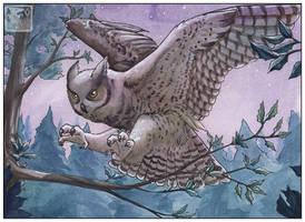 Owl My Owl by ashkey