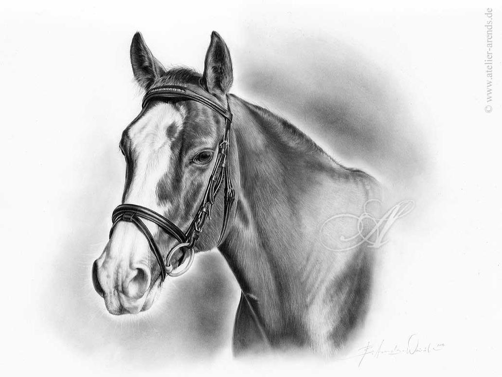 Comission Work: Quarterhorse By Atelierarendsission Work: Quarterhorse By  Atelierarends On Deviantart How To Draw