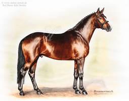 Stallion Herzenswunsch by AtelierArends