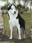 Hundeportait-Husky-Pastell