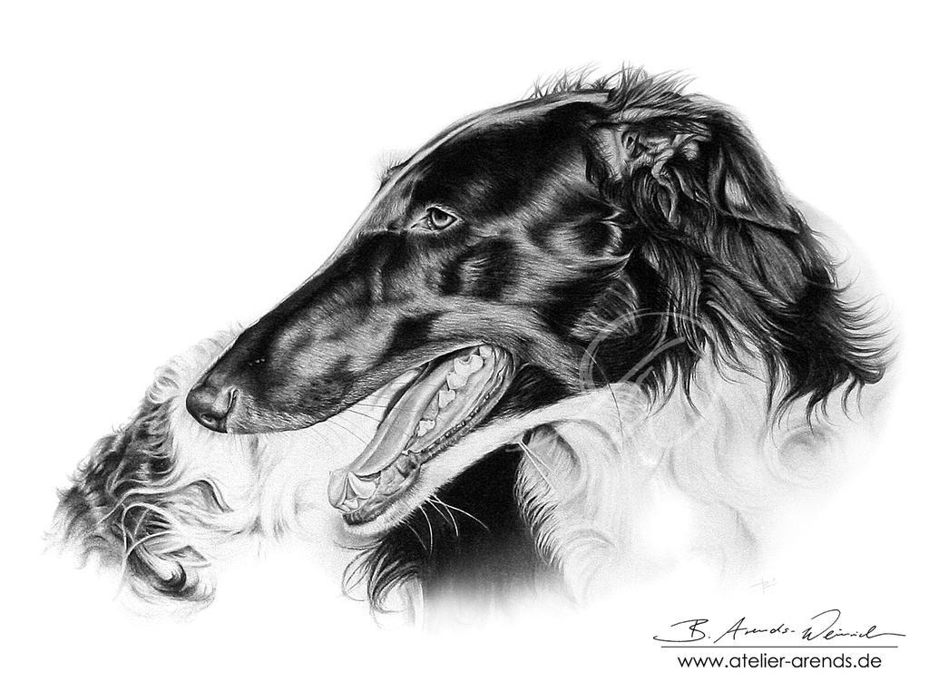 Dogportrait Barsoi by AtelierArends
