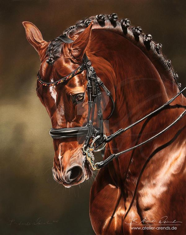 Dressage Horse Damon Hill NRW