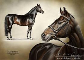 Pferdeportrait--Mandingo by AtelierArends