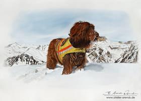 Hundeportrait Balu [D]