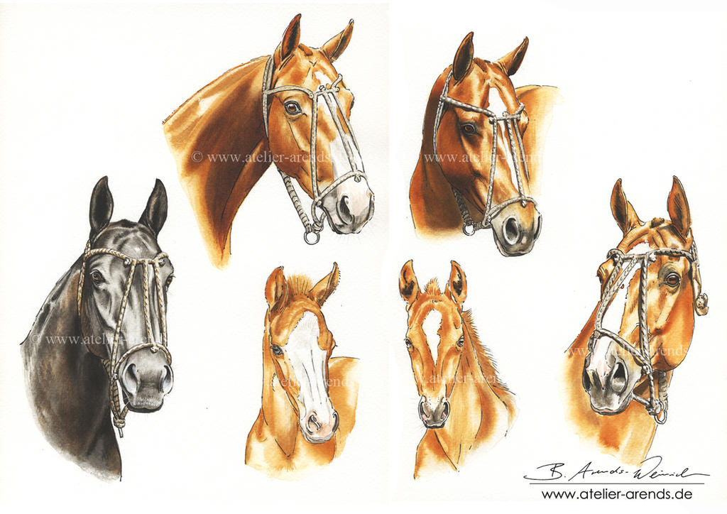 Polo Horses 2015 by AtelierArends