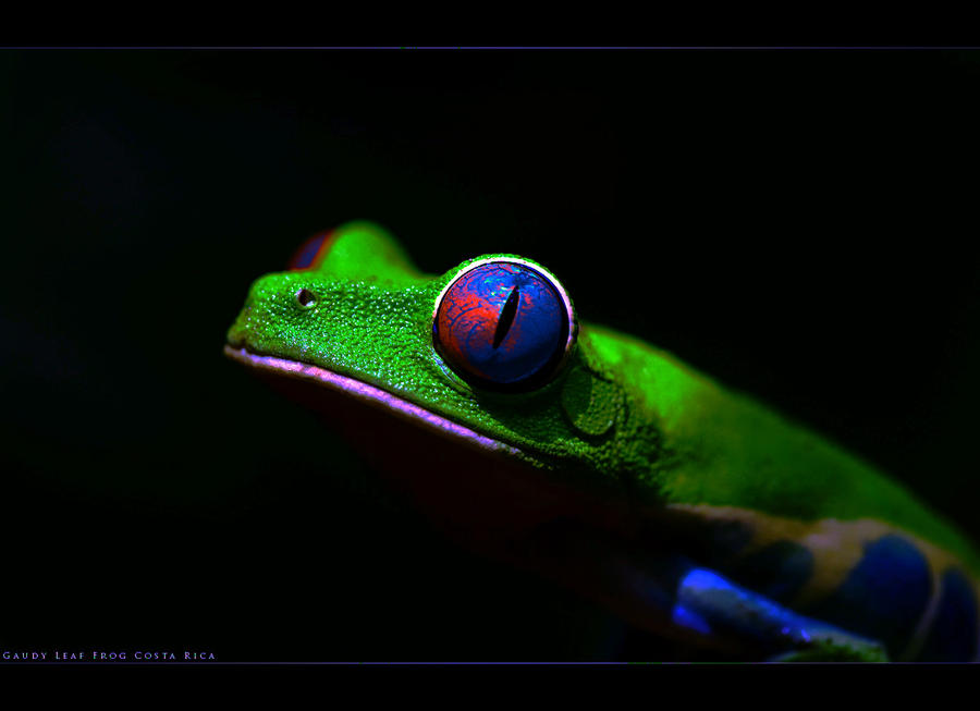 Neon Frog by x-p-r-e-s-s