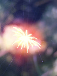 Spider Firework