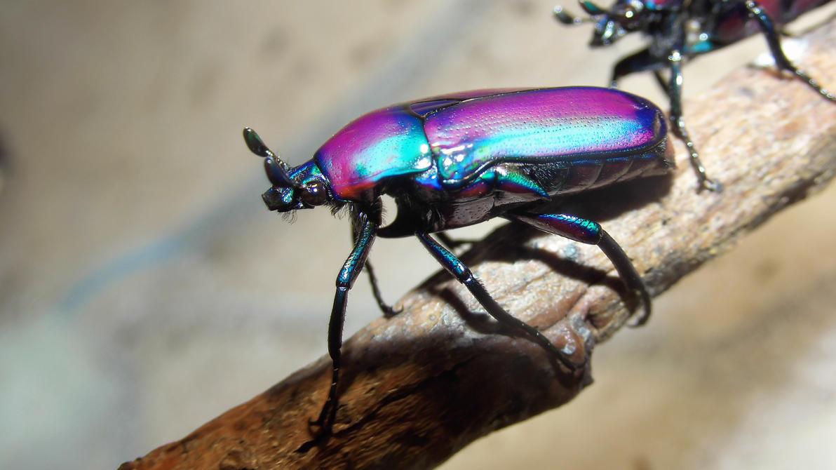 Meine Füßer und Käfer Cute_beetle_by_op_girl16-d8315re