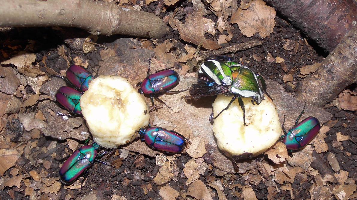 Meine Füßer und Käfer Beetle_size_difference_2_by_op_girl16-d843gwv