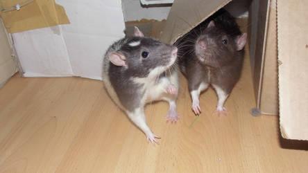 Kili and Fili 2