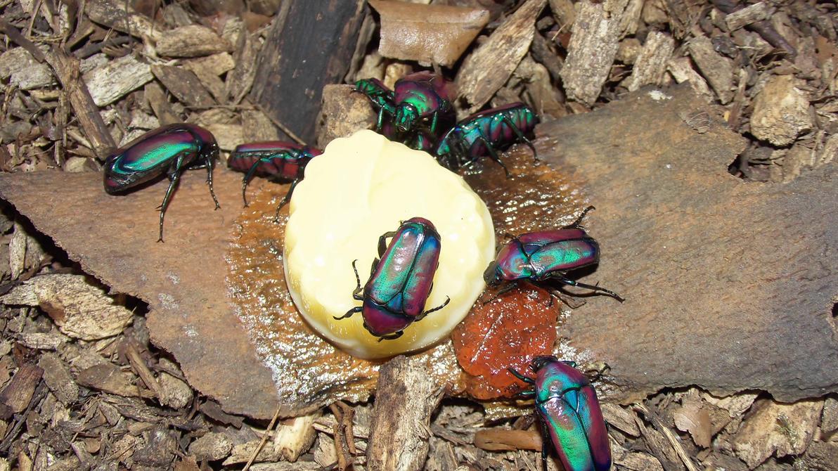 Meine Füßer und Käfer Everyone_loves_beetle_jelly_by_op_girl16-d8cf4xi