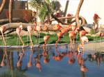Flamingo Stock
