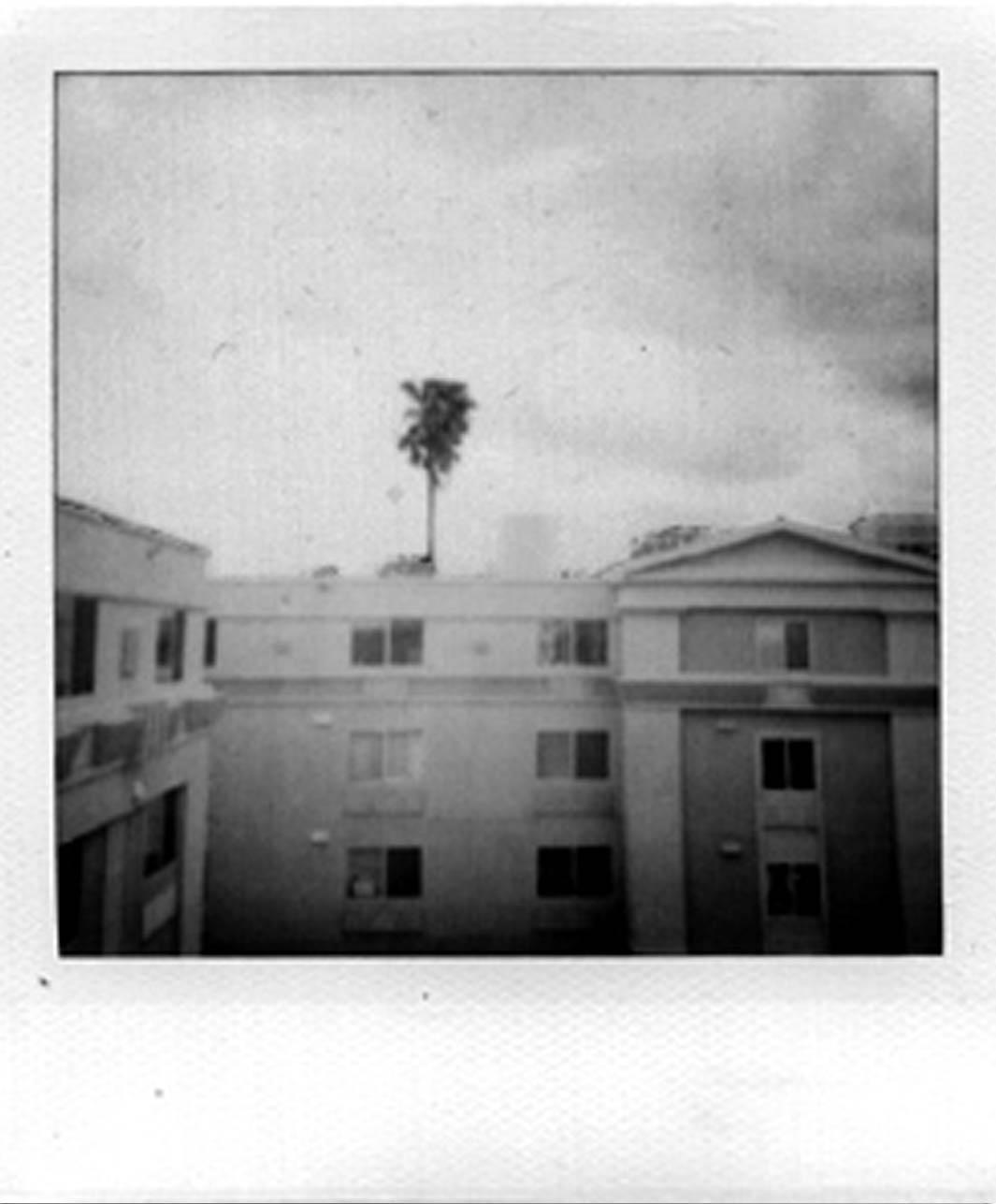 palmtree by zenmasterjack