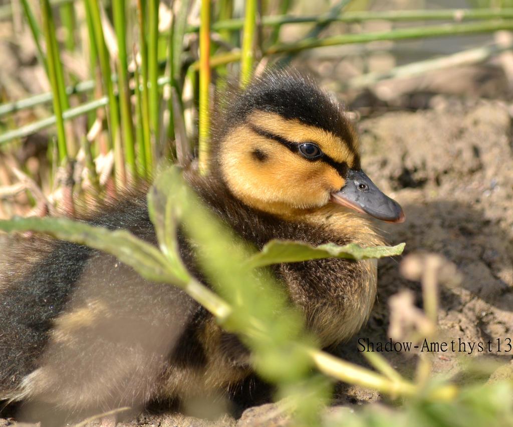 Sitting duck by Shadow-Amethyst13
