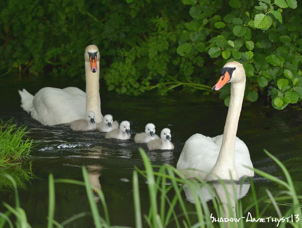 Happy family by Shadow-Amethyst13