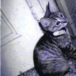 blue ninja cat