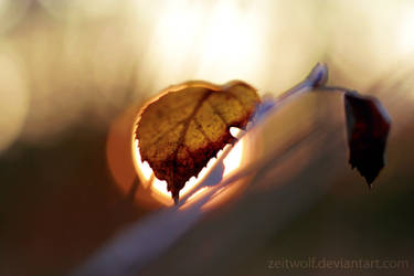 Dec 02, 2006 - Sun and Leaves by Zeitwolf