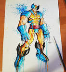 Wolverine Blue and Gold Saucy