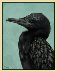 Cormorant by willowleaf