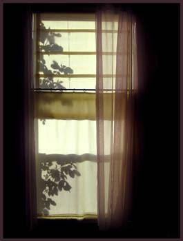 window 2- roses