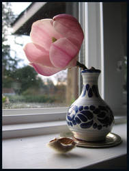 magnolia- morning window
