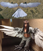 Stormwing - Perigrine Wings by Sunnybrook1