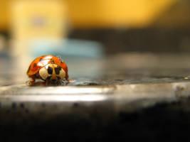 Mr. Ladybug by xFotoPhreek