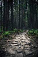 Wandering by xFotoPhreek