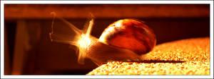 Snail Speed .1 by Aerumnosus