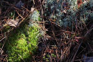 A Meeting of the Moss by Delijume
