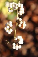Angel Berries by Delijume