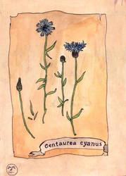 17. Favourite plant by mellenes
