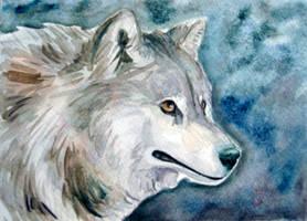 Gray Wolf by ZulayaWolf