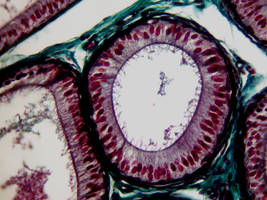 The Art of Histology by fehimesen