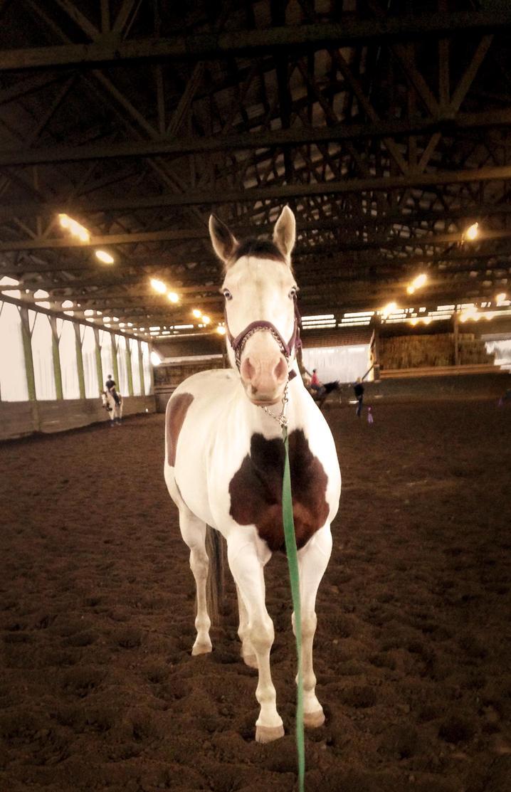 My New Pony by DamianMcGintyFan222