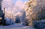 Winter's Day by Petritap