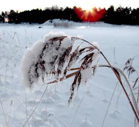 Burden of Winter