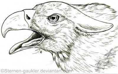 Athalean Patreon Sketch by Sternen-Gaukler