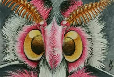 Walker's Moth by Sternen-Gaukler