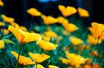 Flower butterflies