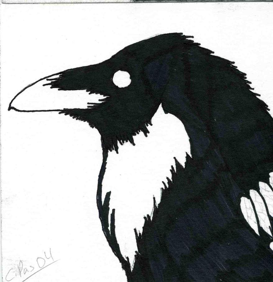 Raven 3 by xacuchina