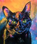 Portrait of my kitty