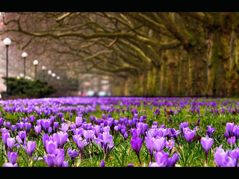 Szczecin in violet by sweetpainter