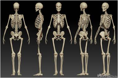 Human Skeleton Study by Meletis