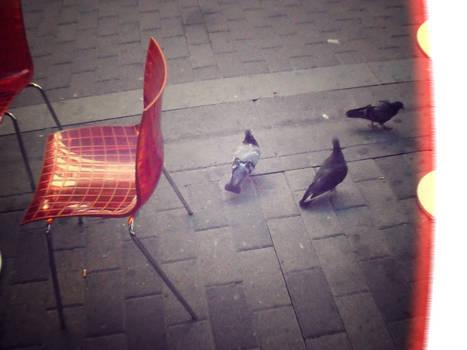 Lintuja ja tuoleja