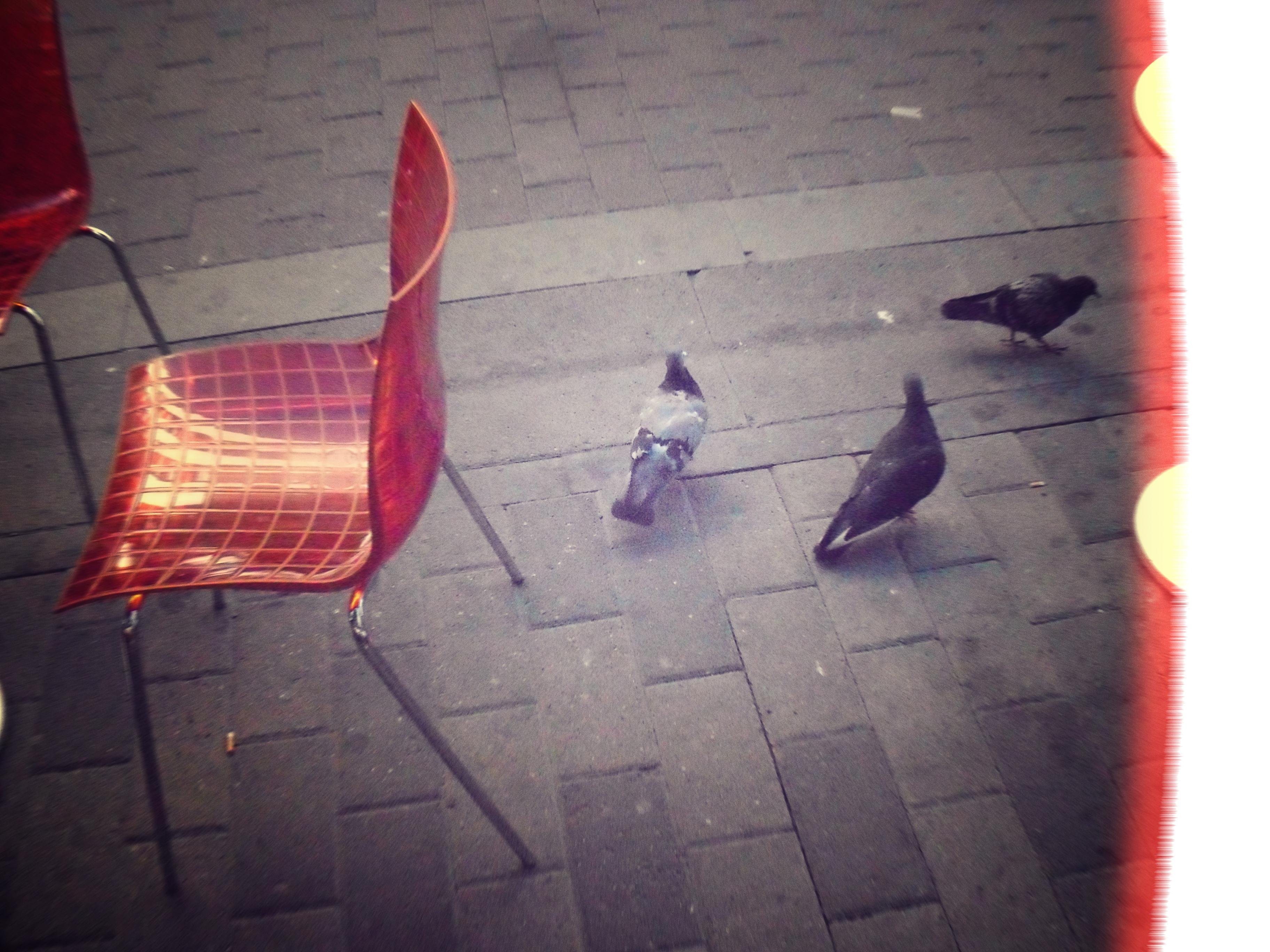 Lintuja ja tuoleja by juhtolv
