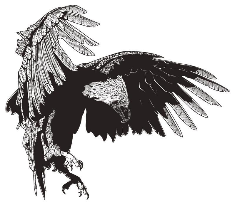 BANOG- Great Philippine Eagle by IamAxiom