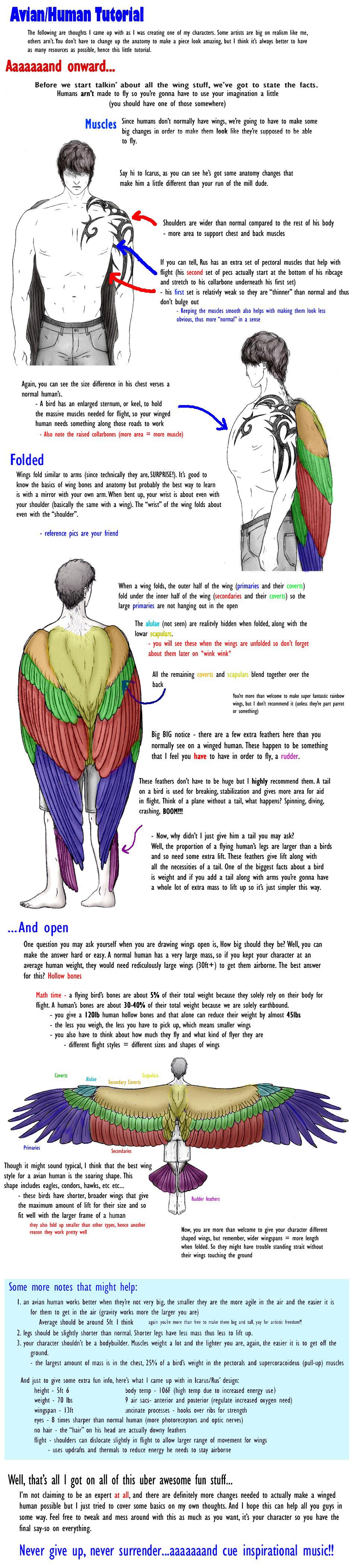 Ziemlich Bird Wing Anatomy Bones Fotos - Menschliche Anatomie Bilder ...