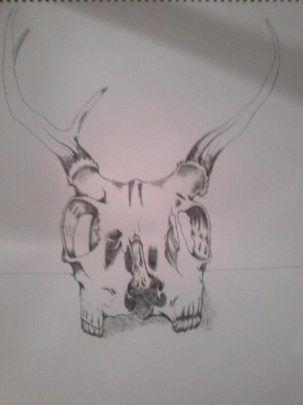 Deer Skull by shroomstone